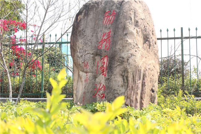 发现校园之美(十)︱玉溪技师学院里美丽石头『会说话』