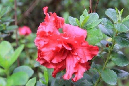 发现校园之美(六)    玉溪技师『花事』:校园胜景在眼中