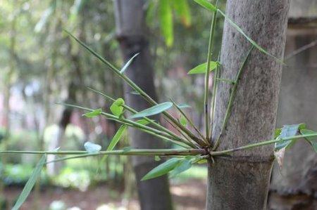 发现校园之美(九)︱玉溪技师『竹林』:犹如一朵朵美丽绿色之云